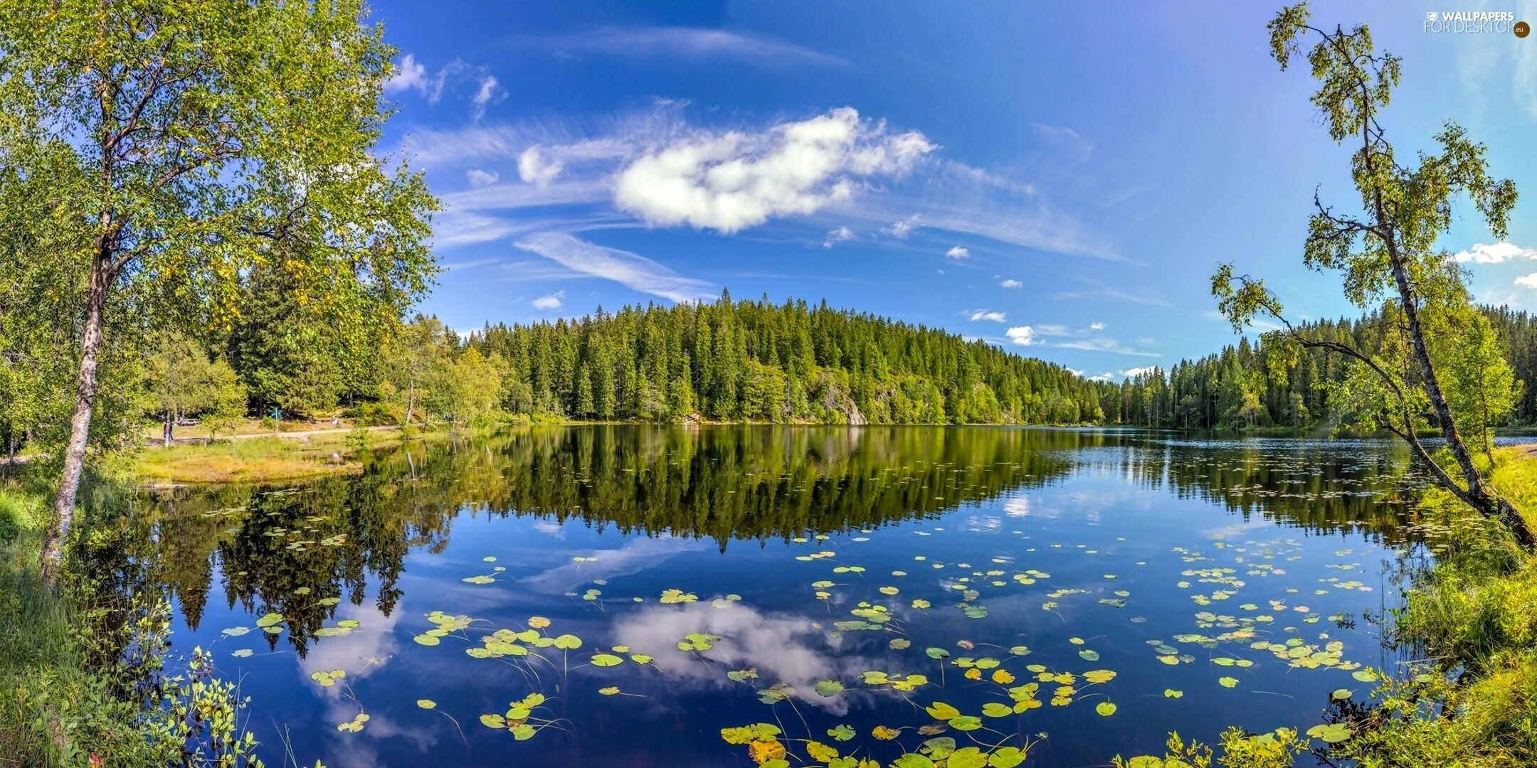 Norway, lake, forest - For desktop wallpapers: 2160x1080