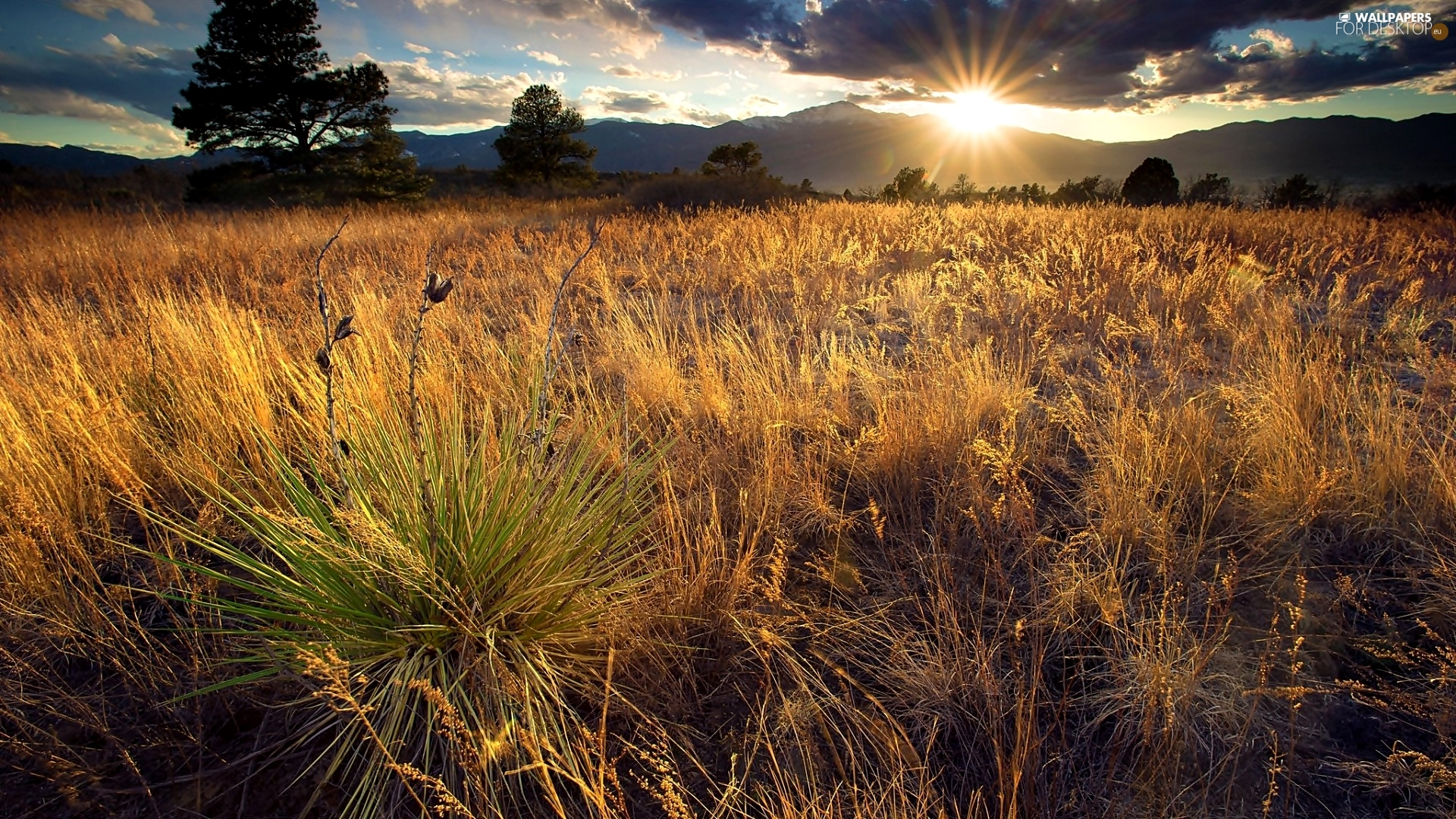 viewes, grass, Sky, trees, Meadow, clouds, rays of the Sun