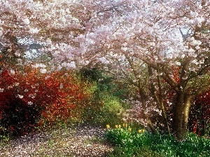 Garden, Blossoming, cherry