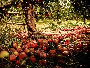 apples, apple-tree, orchard, Przebijaj?ce, luminosity, blur, sun, flash, ligh