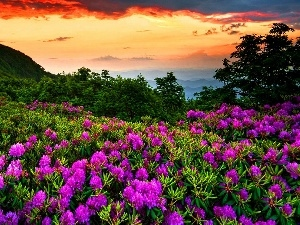 Sky, Mountains, Flowers
