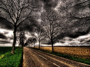 trees, viewes, dark, clouds, Way