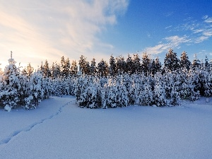 winter, Great Sunsets, viewes, snow, trees