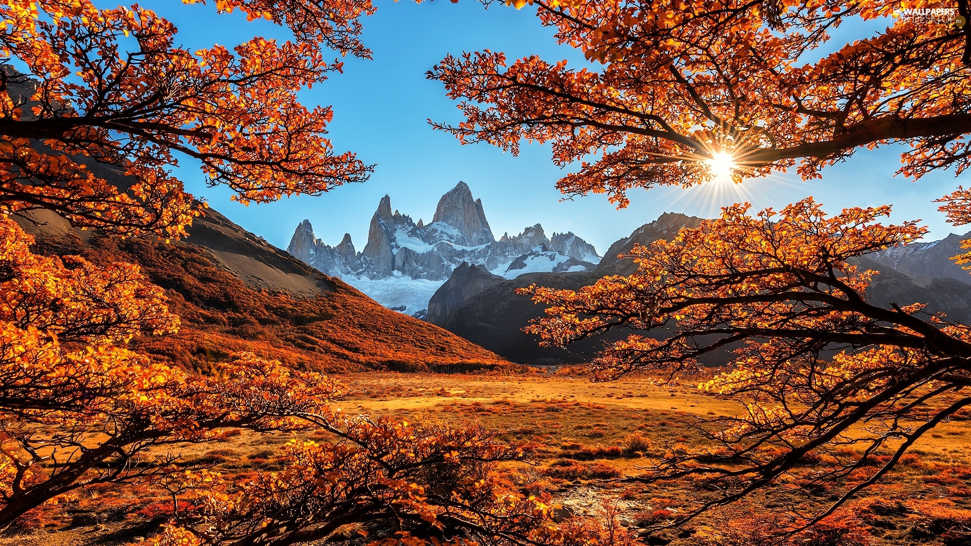 Fitz Roy Mountain, Andes Mountains, Patagonia, Argentina, viewes, branch pics, autumn, trees, rays of the Sun
