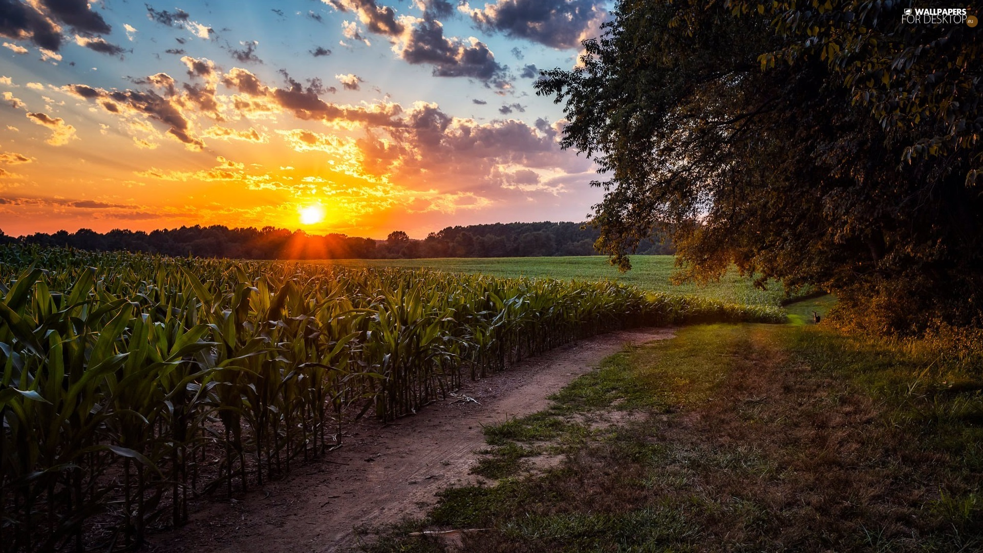 trees, Field, Sunrise, clouds, viewes, Path