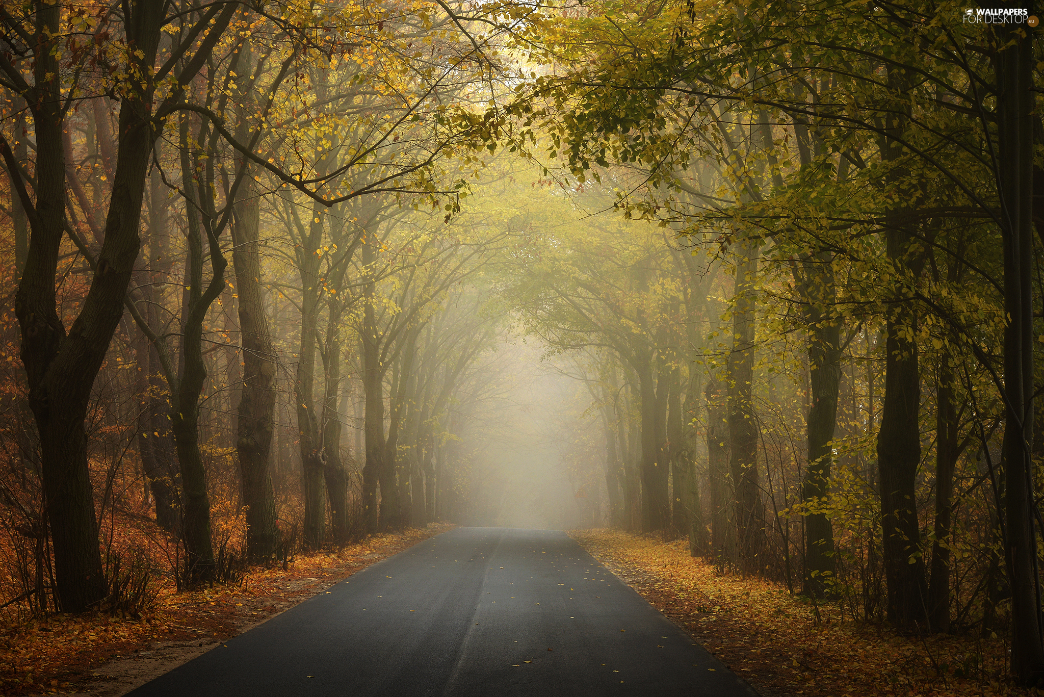 viewes, forest, Way, Fog, autumn, trees