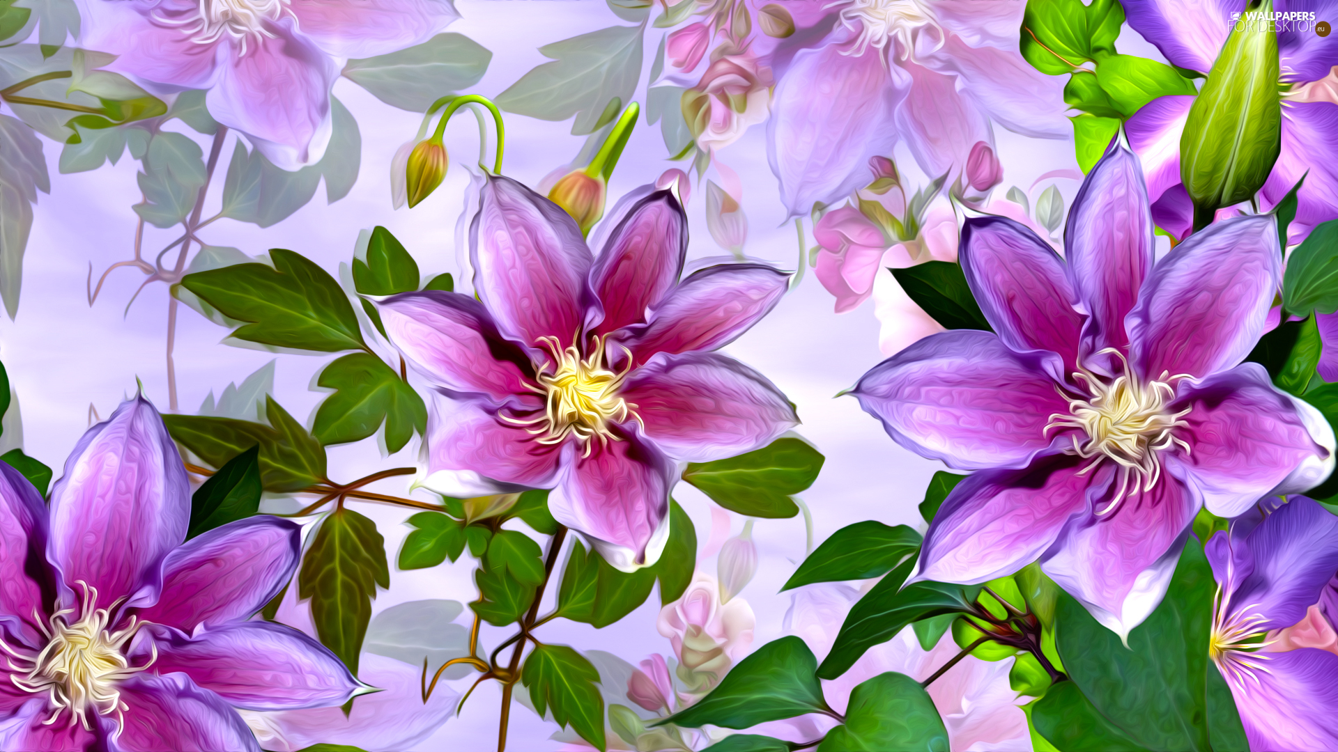 graphics, Flowers, Clematis