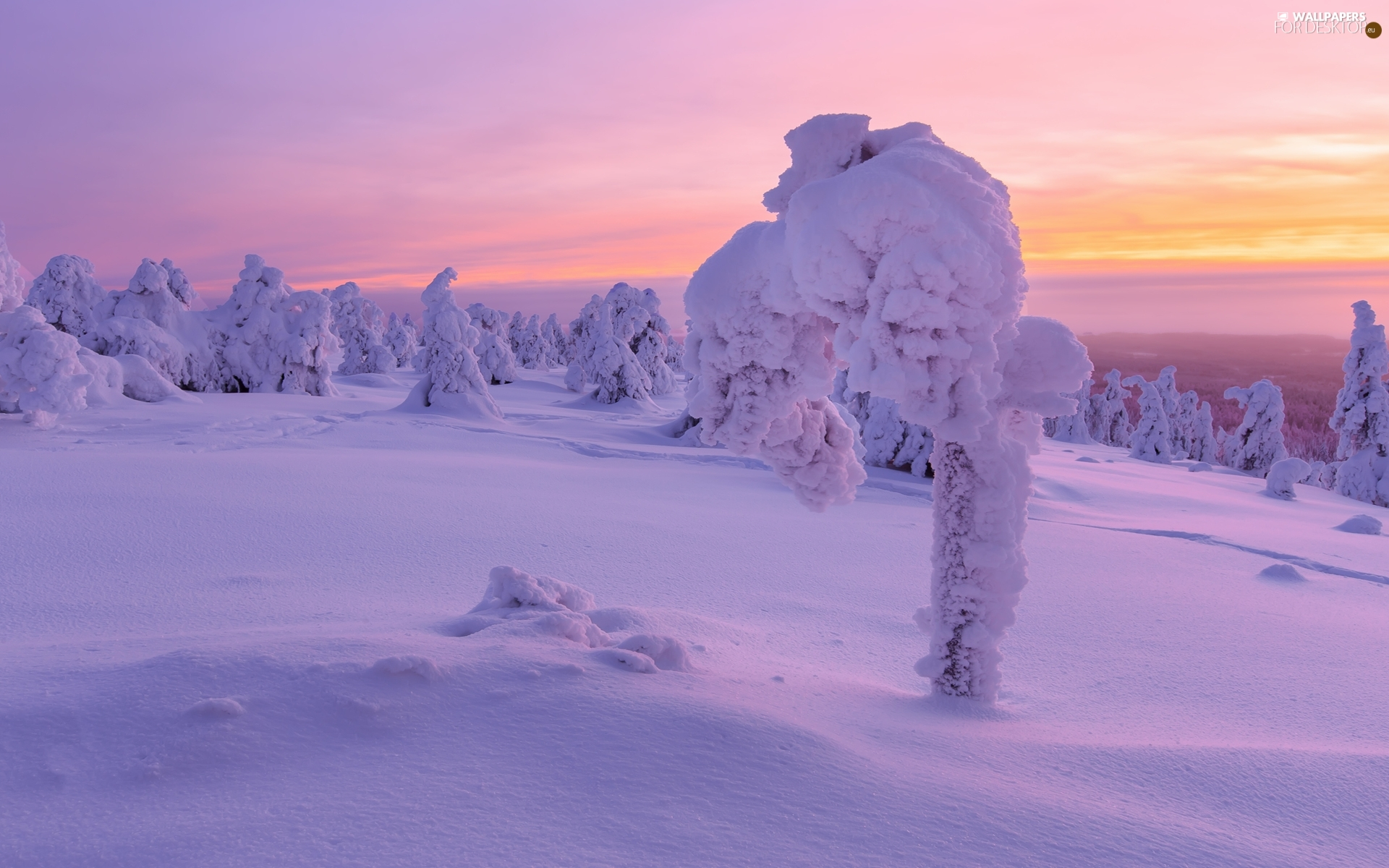 Snowy, snow, viewes, Great Sunsets, trees, winter
