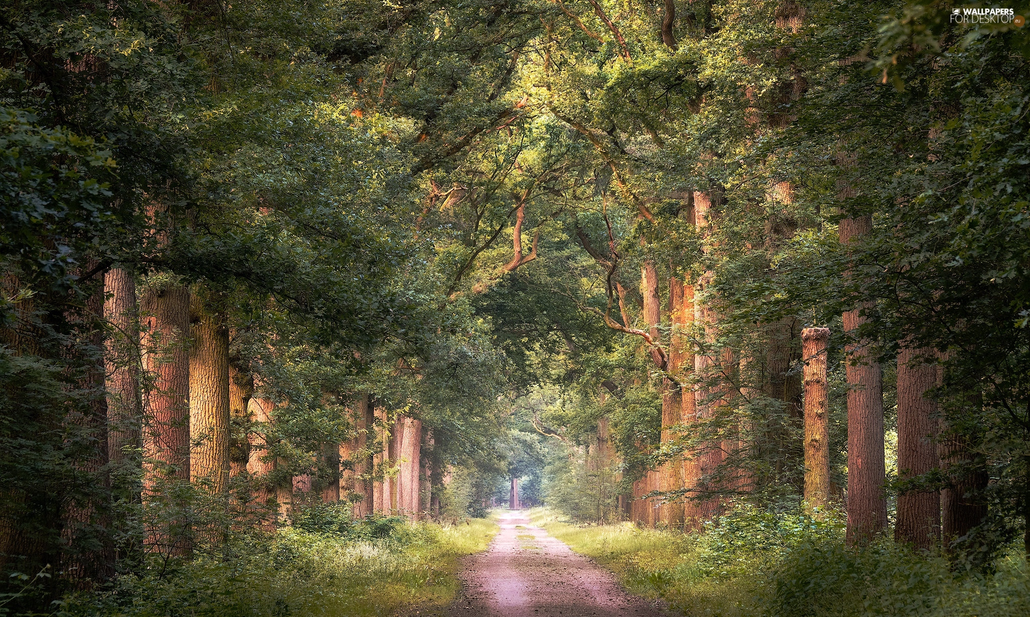 viewes, Hardwood, Way, trees, forest