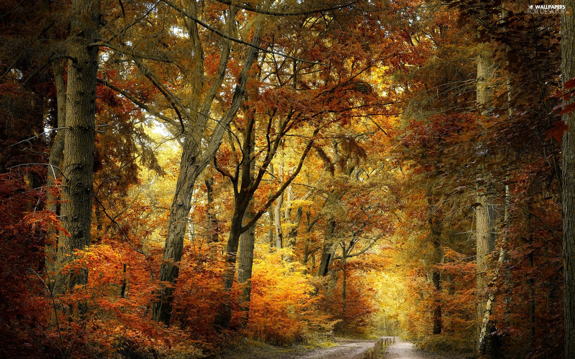 trees, forest, color, Leaf, viewes, autumn