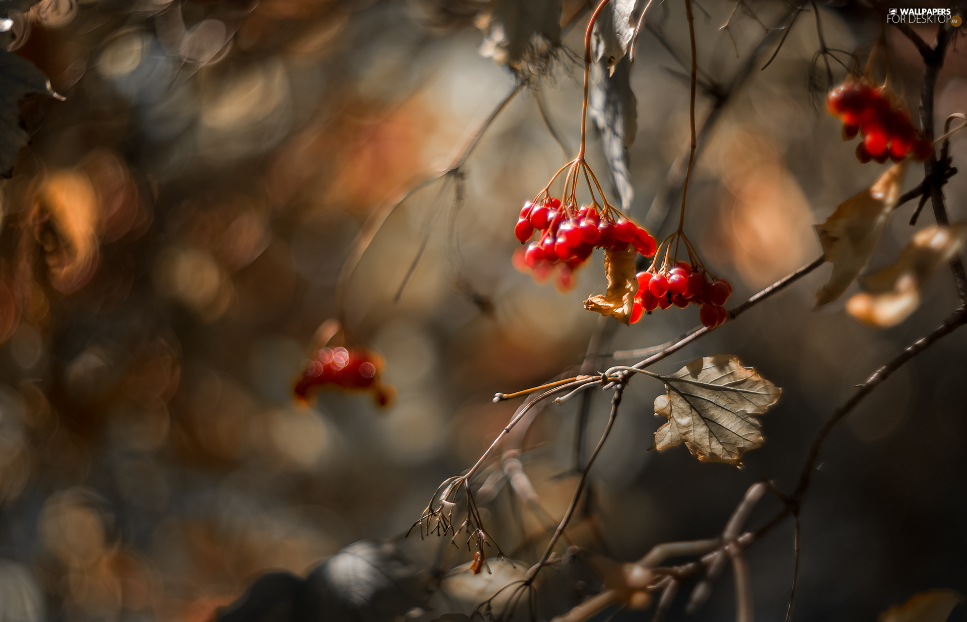 Red, Autumn, dry, leaves, Fruits, Twigs