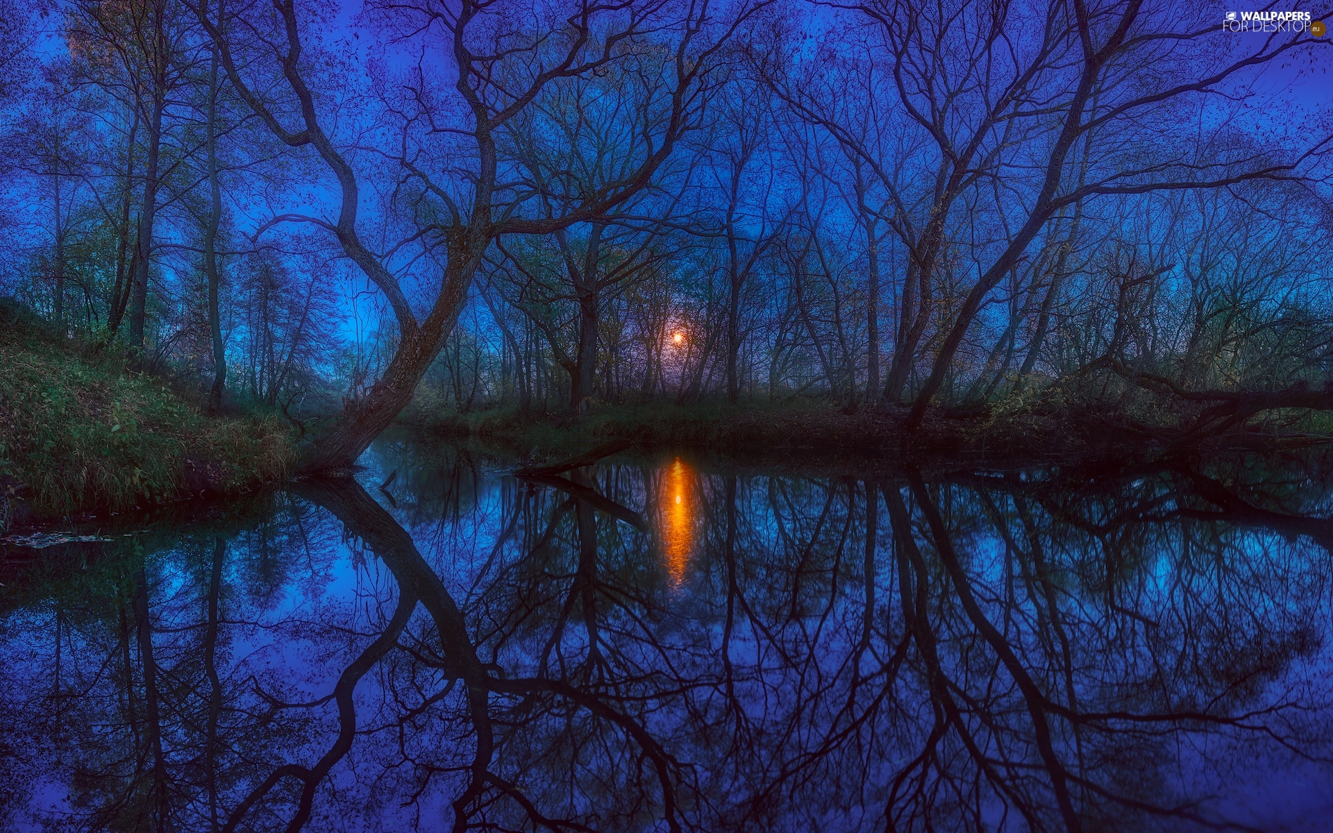 viewes, lake, moon, Night, reflection, trees