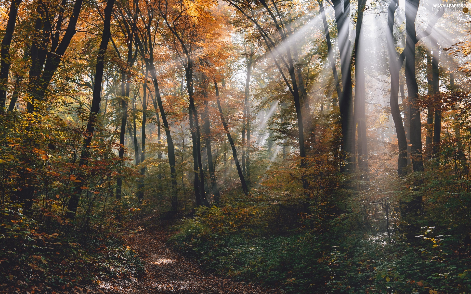 viewes, forest, rays of the Sun, trees, autumn, Path, light breaking through sky