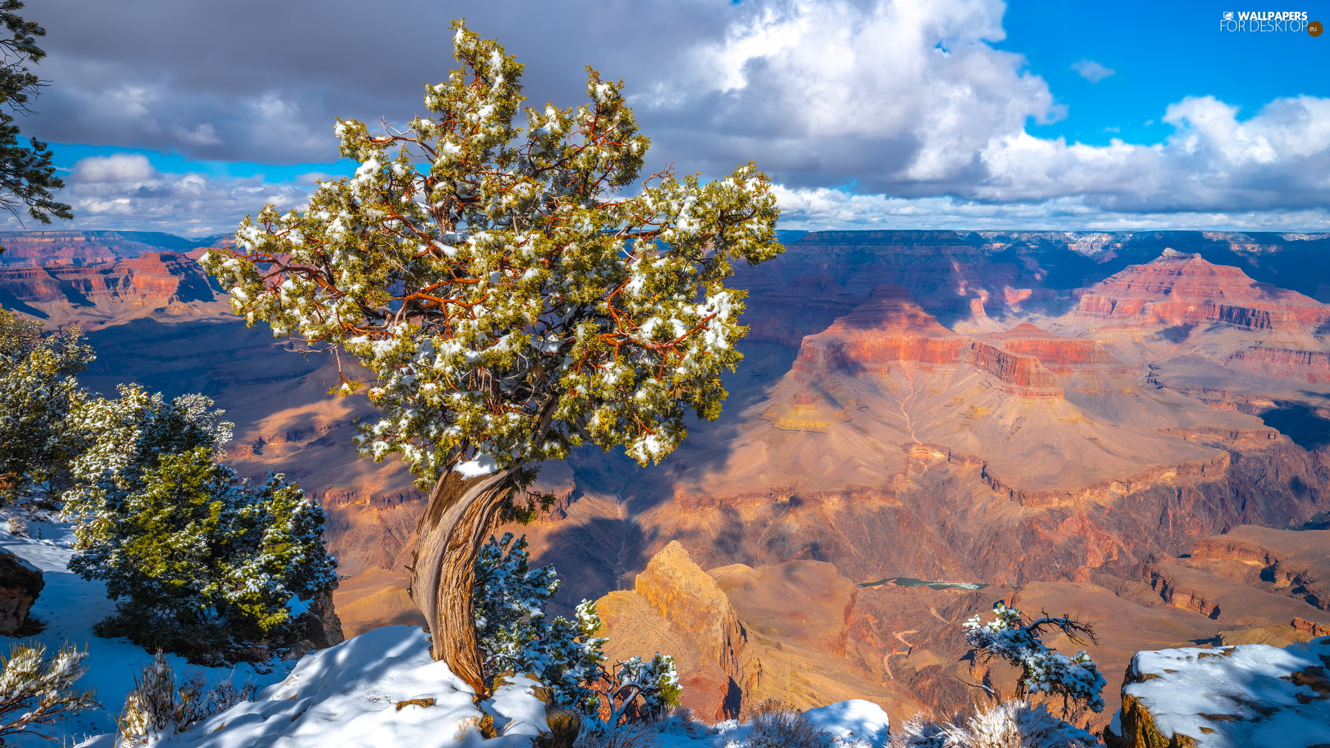 Grand Canyon, Grand Canyon National Park, Grand Canyon, Mountains, State of Arizona, The United States, trees, pine, Rocks