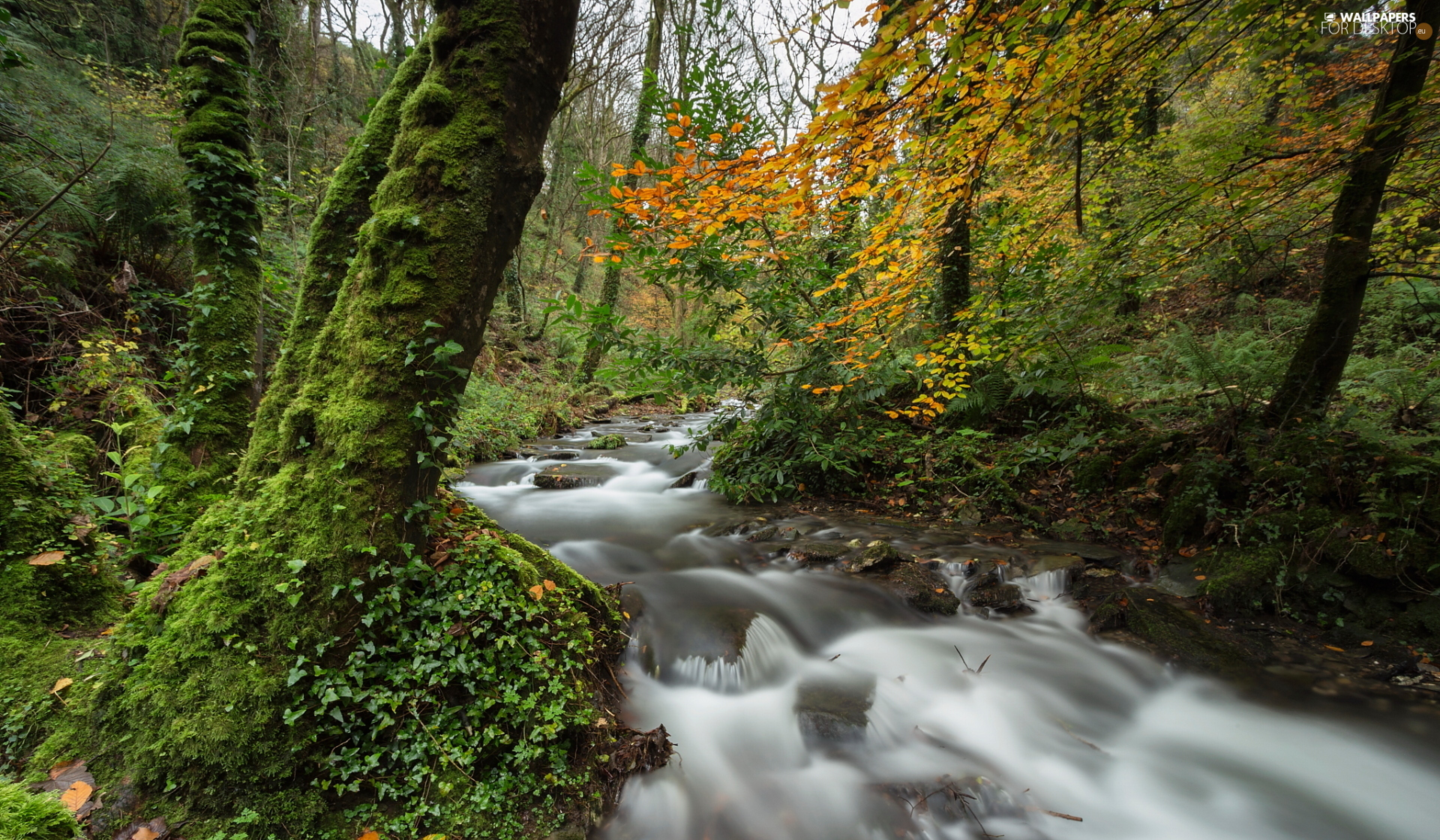 viewes, mossy, Stones, Stems, Plants, trees, forest, River