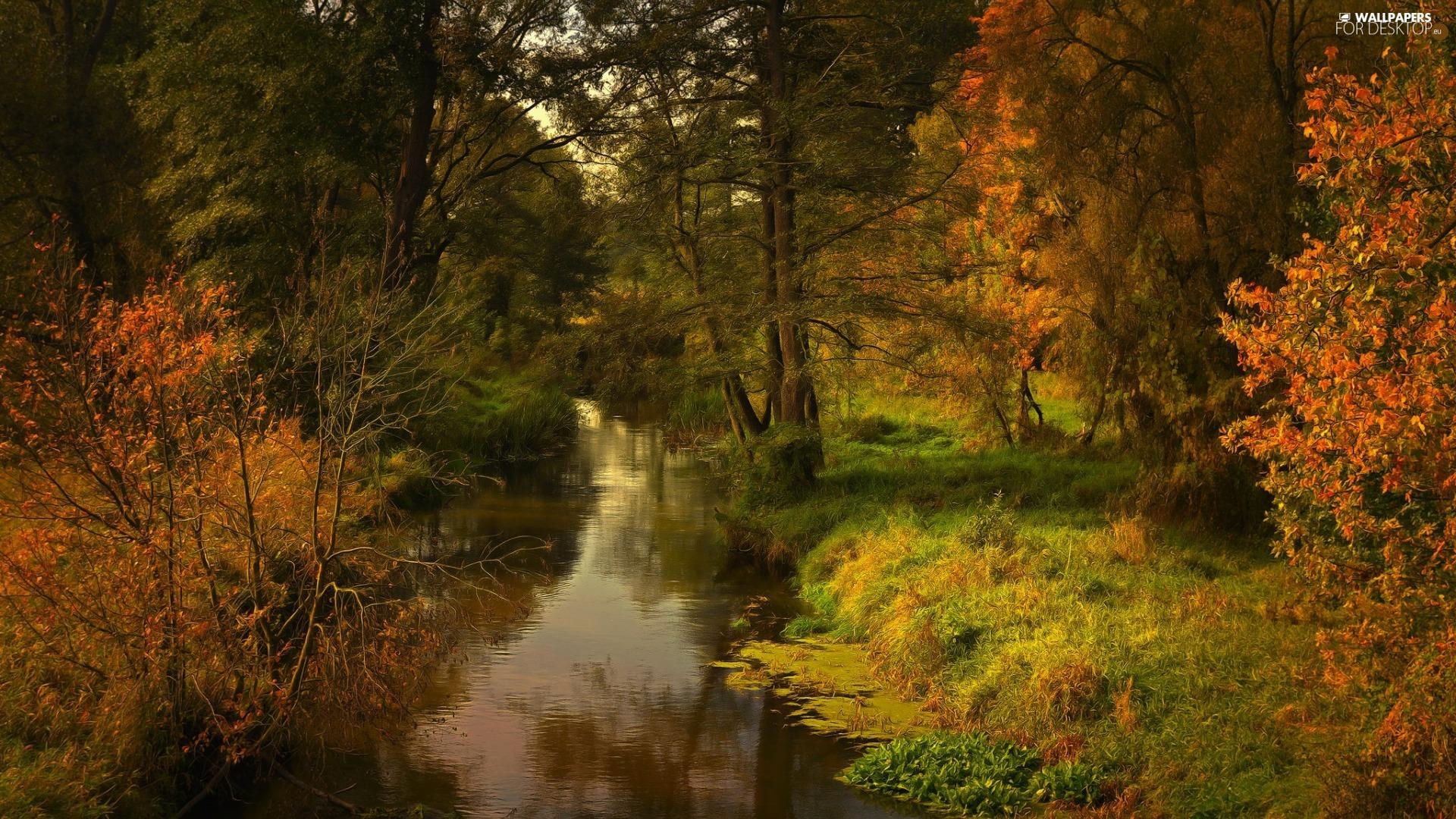 viewes, autumn, forest, River, Bush, trees - For desktop ...