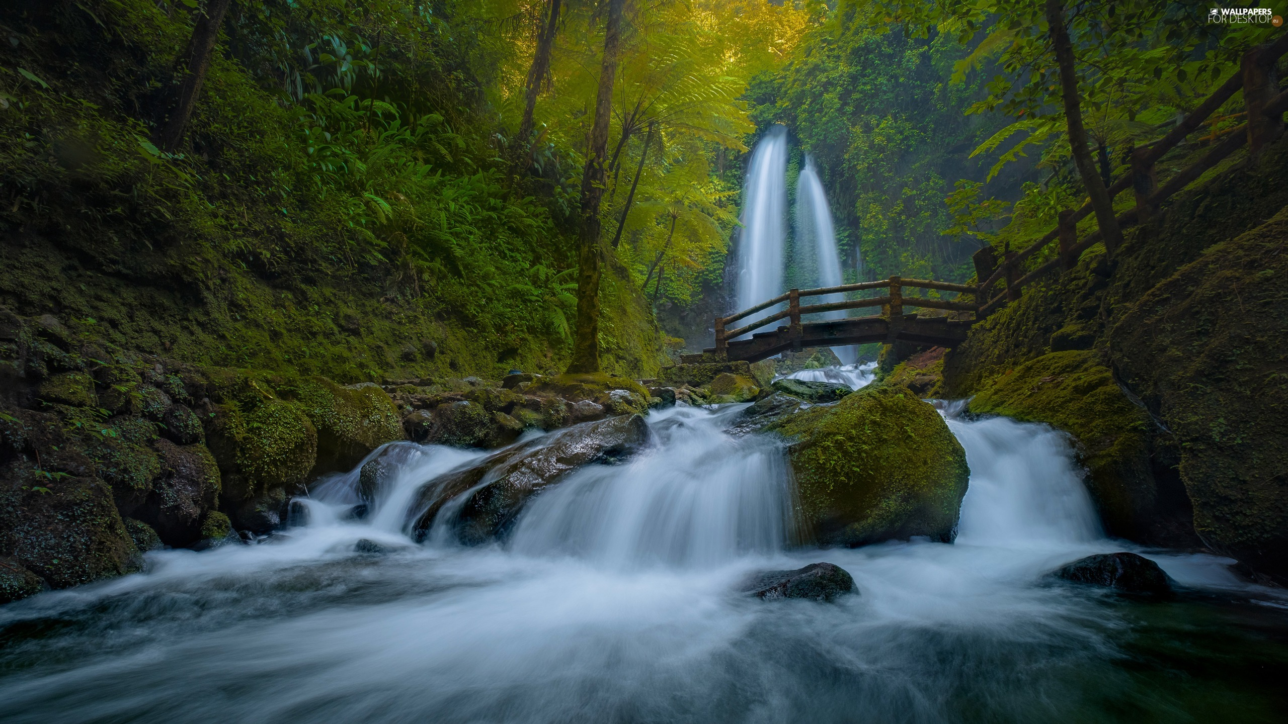 forest, River, wooden, bridges, waterfall