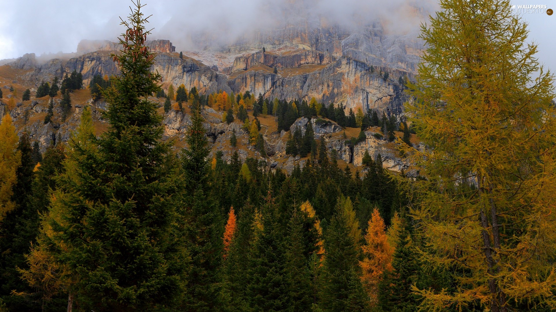Fog, Mountains, viewes, Spruces, trees, rocks
