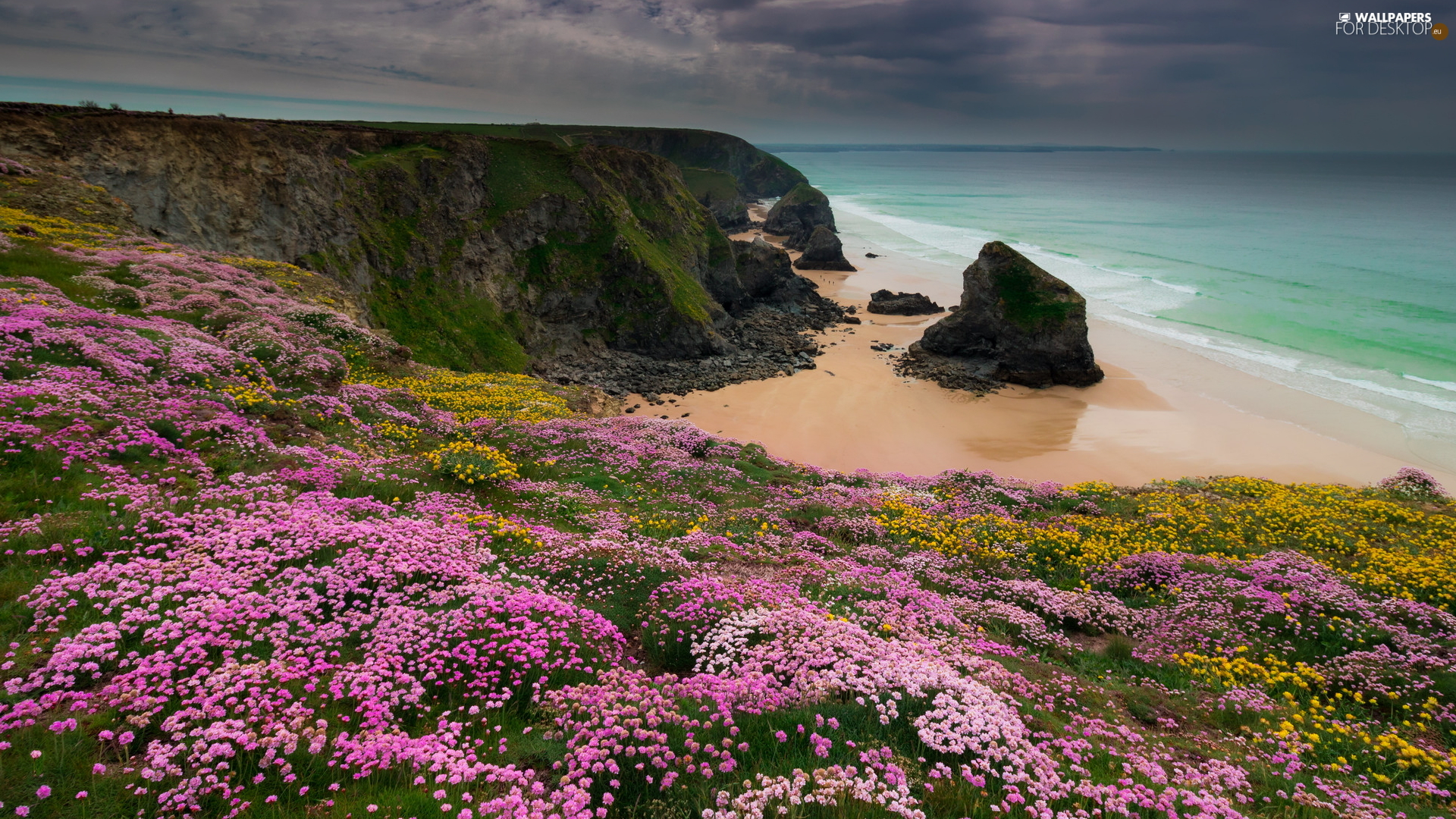 Carnewas and Bedruthan Steps, Coast, Celtic Sea, rocks, Sea Pink, Cornwall, England, Flowers