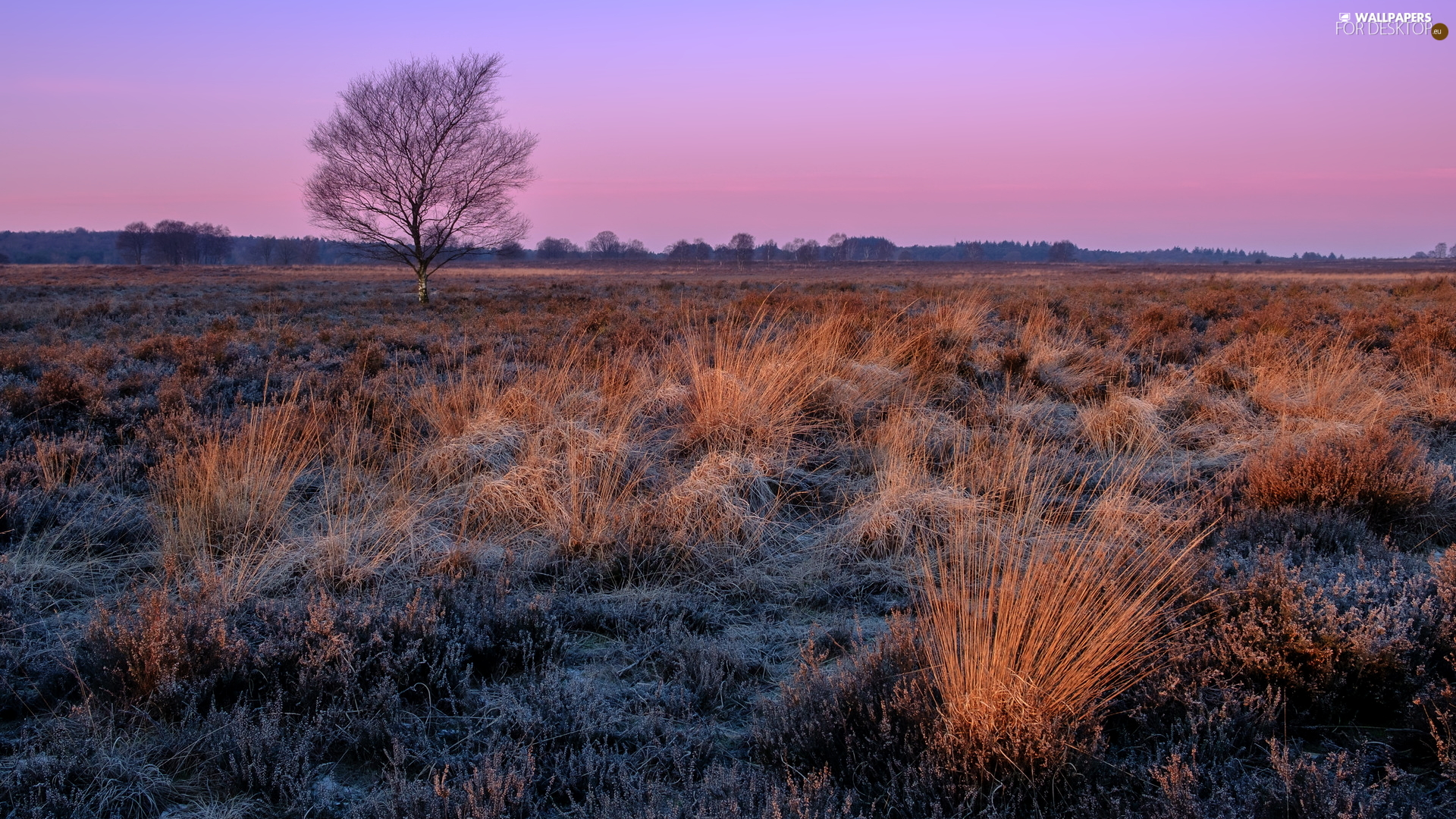 grass, medows, trees, Tufts, field, White frost, Sunrise