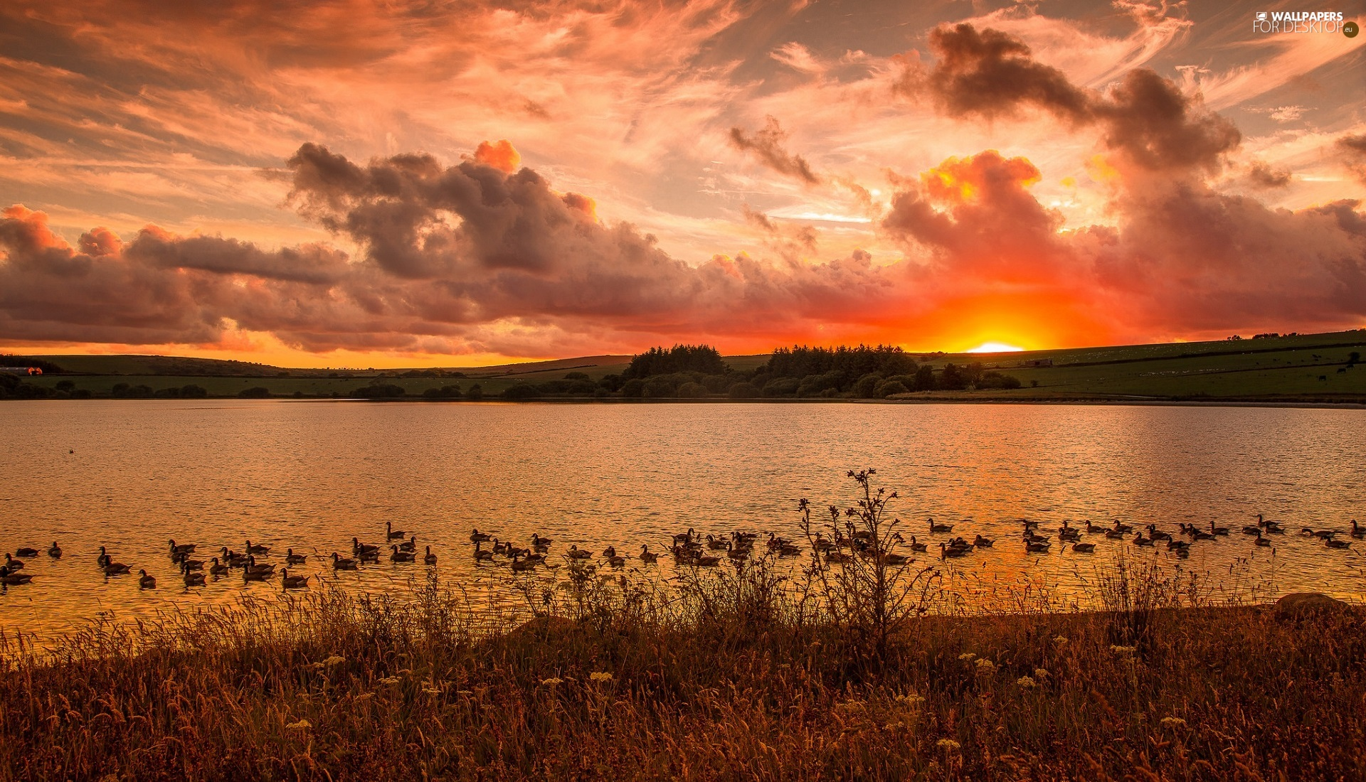 Great Sunsets, ducks, clouds, lake