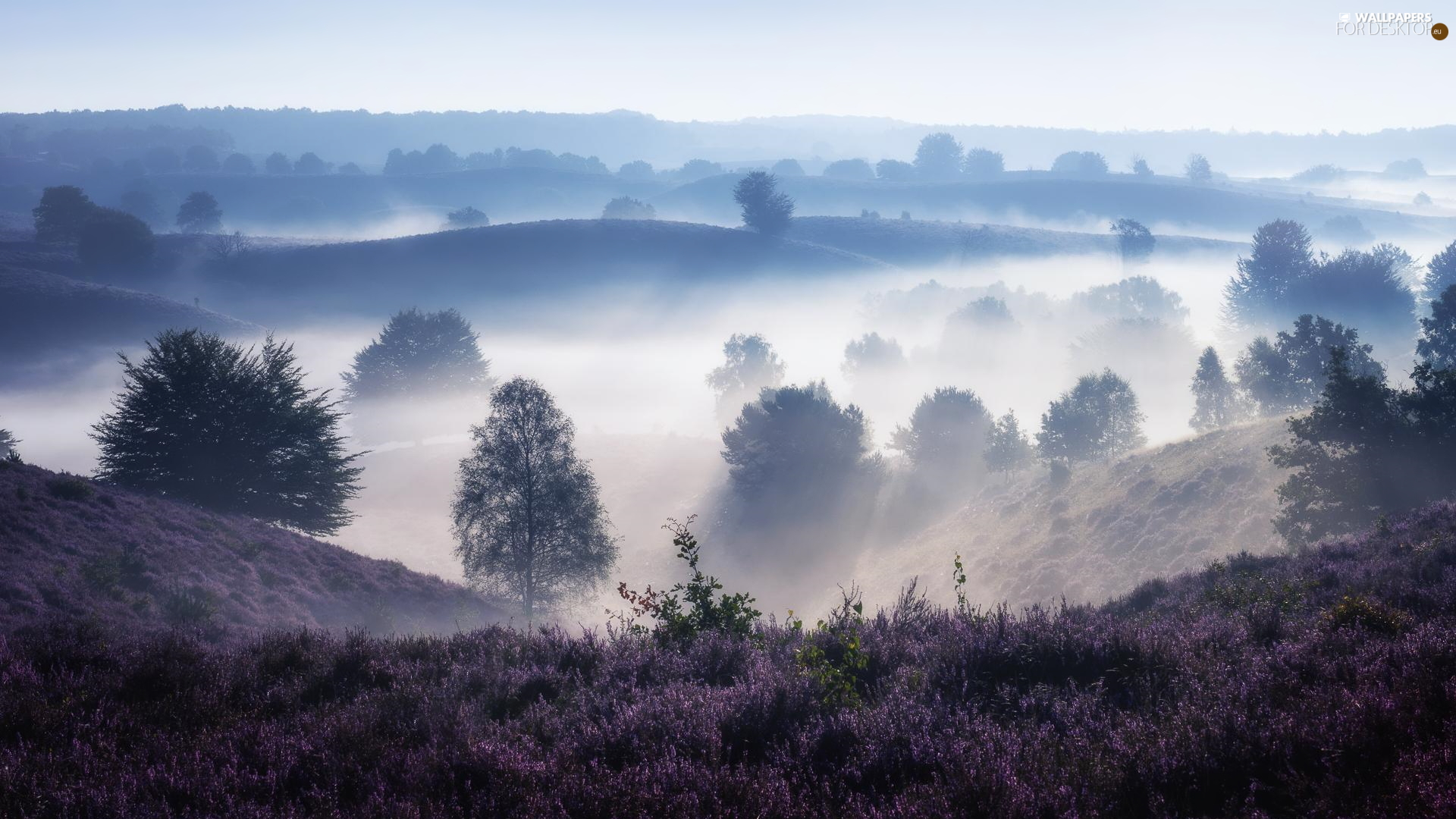 viewes, Fog, heath, trees, The Hills