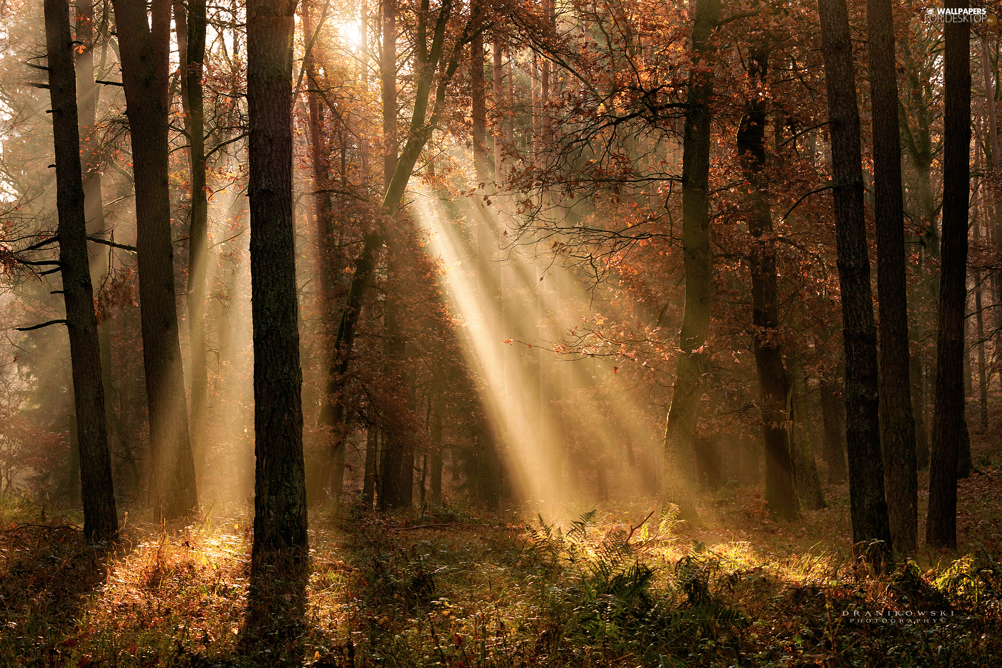 light breaking through sky, autumn, viewes, forest, trees