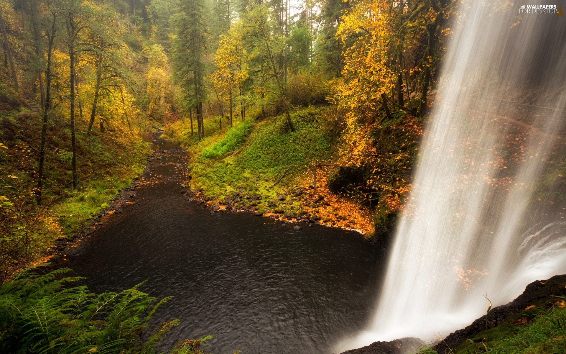 viewes, forest, waterfall, trees, autumn, River, VEGETATION