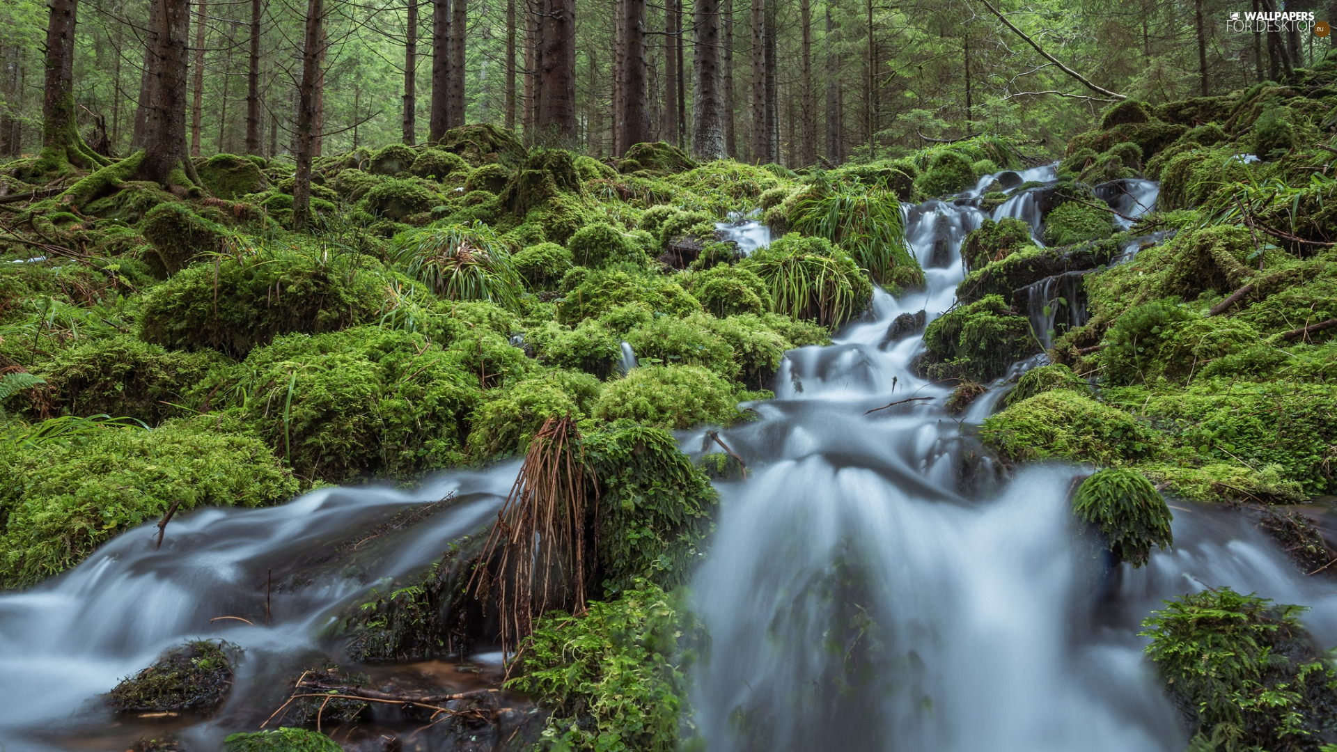 viewes, forest, waterfall, VEGETATION, River, trees