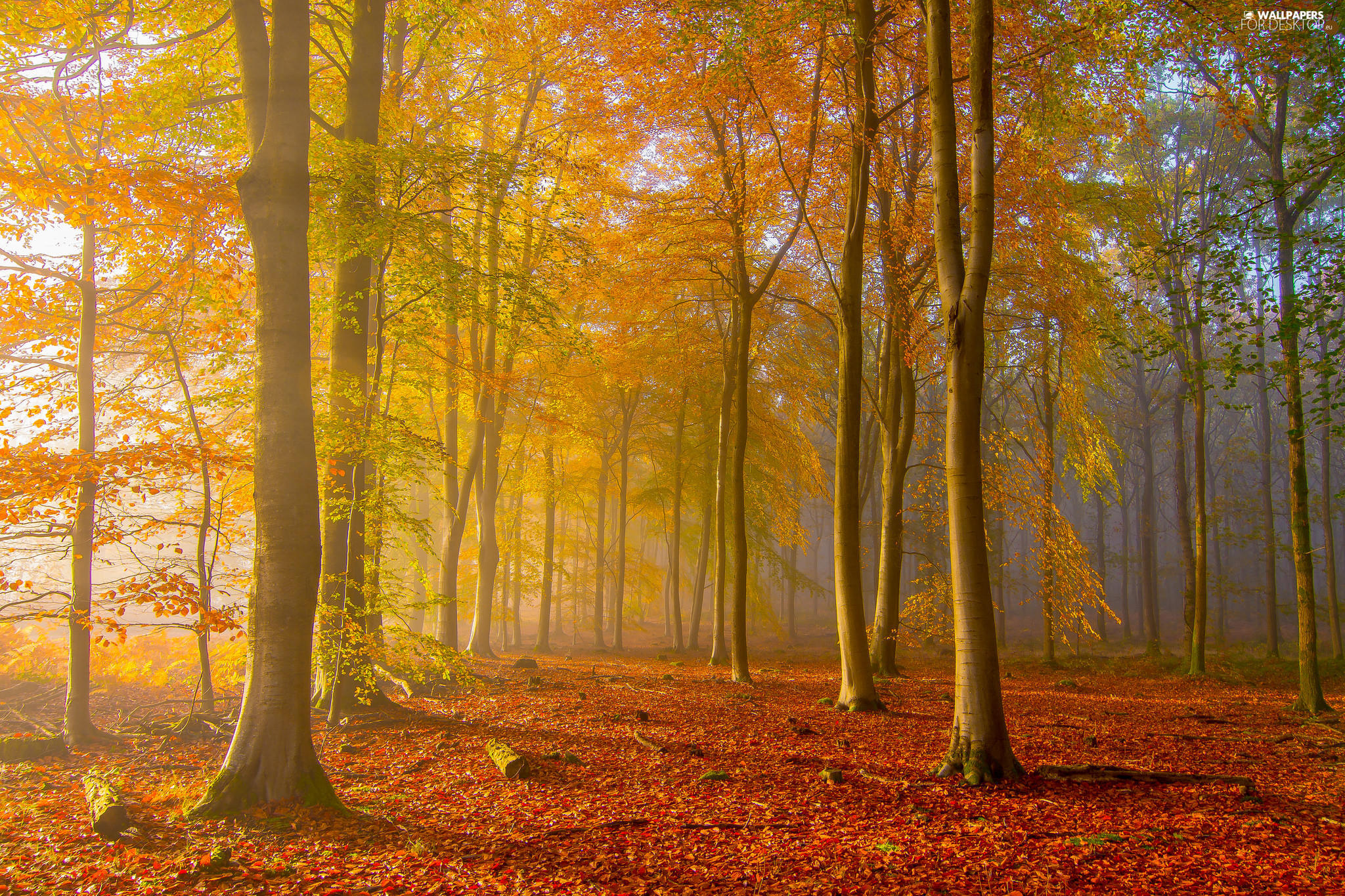 autumn, trees, fallen, viewes, forest, Fog, Leaf