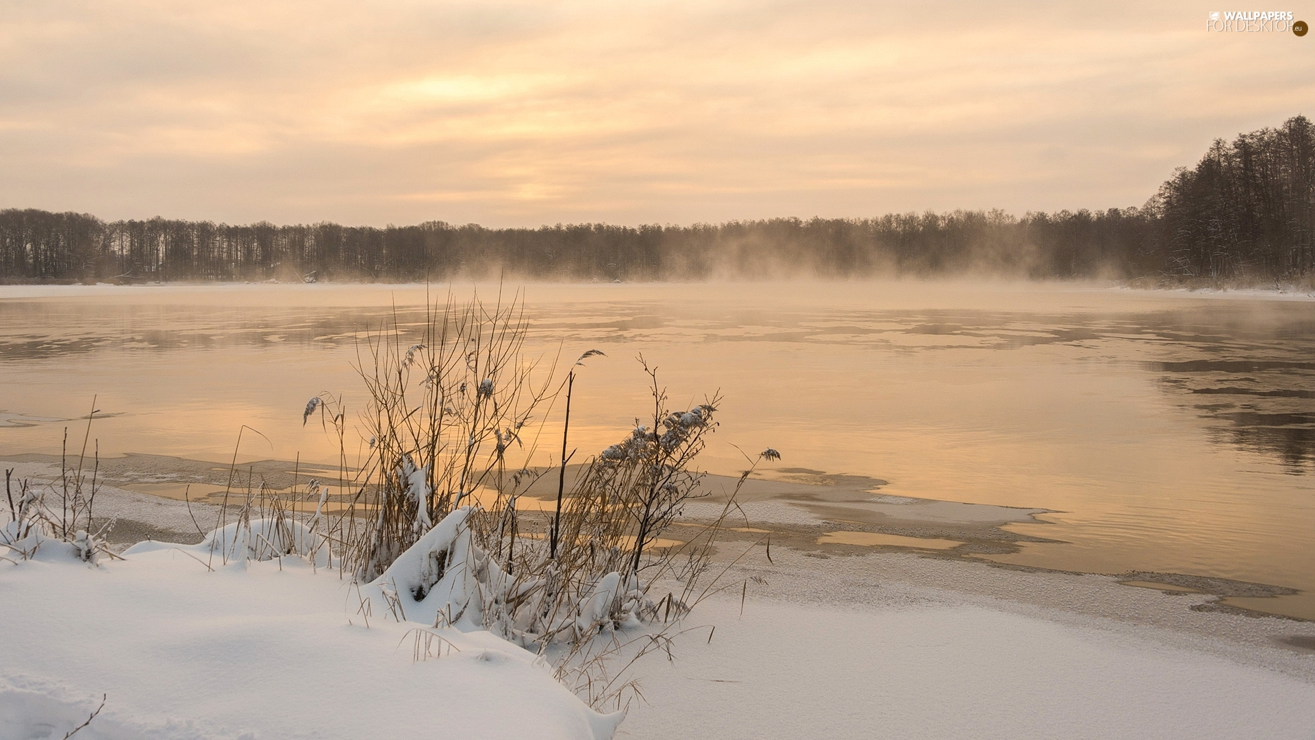 Plants, trees, Fog, viewes, forest, lake, winter