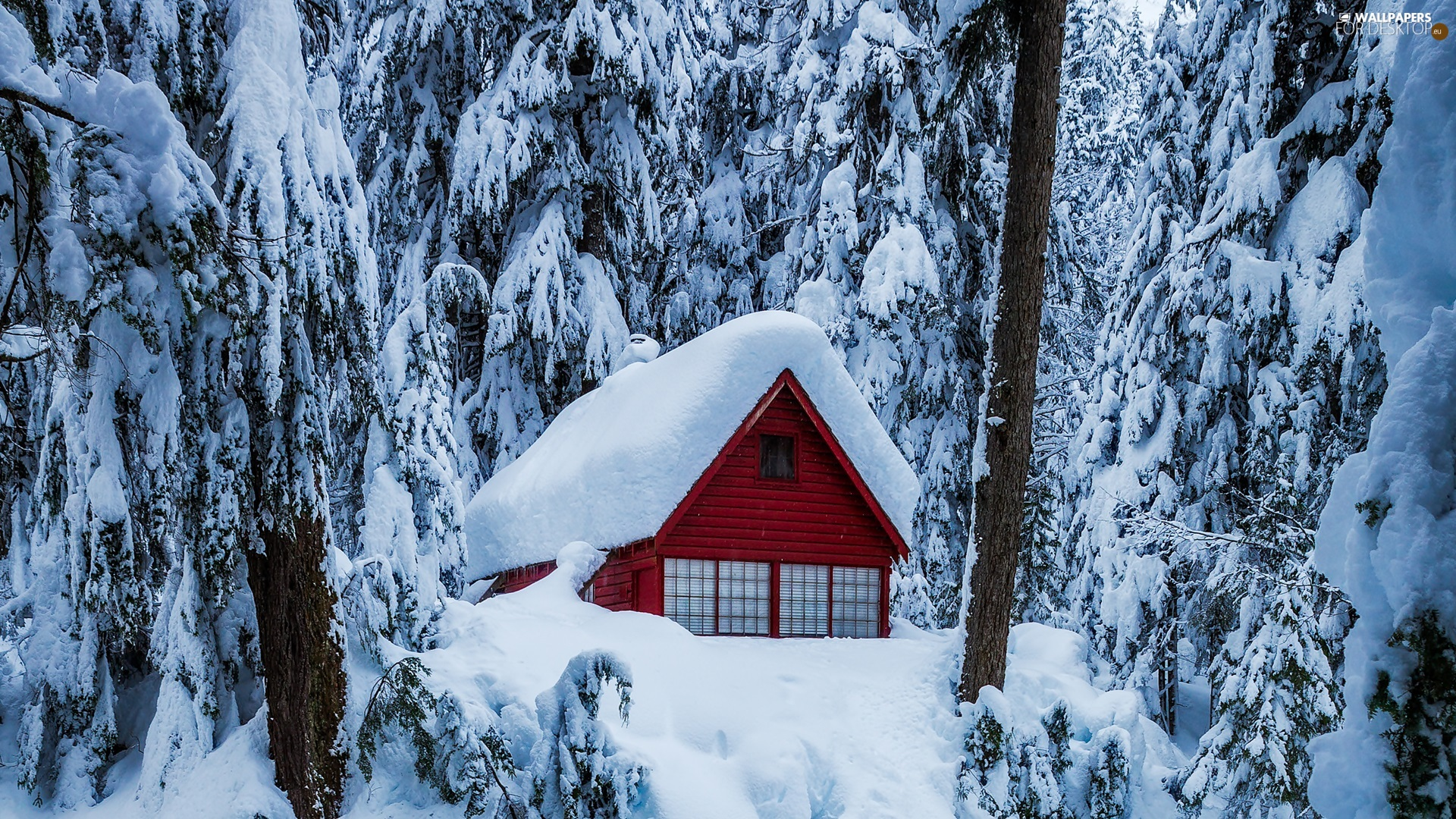 house, winter, trees, viewes, Snowy, forest
