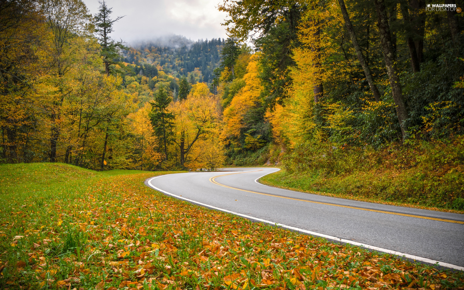 Tennessee State, forest, viewes, autumn, trees, Great Smoky Mountains National Park, fallen, Leaf, grass, color, turn, Way, Mountains, The United States