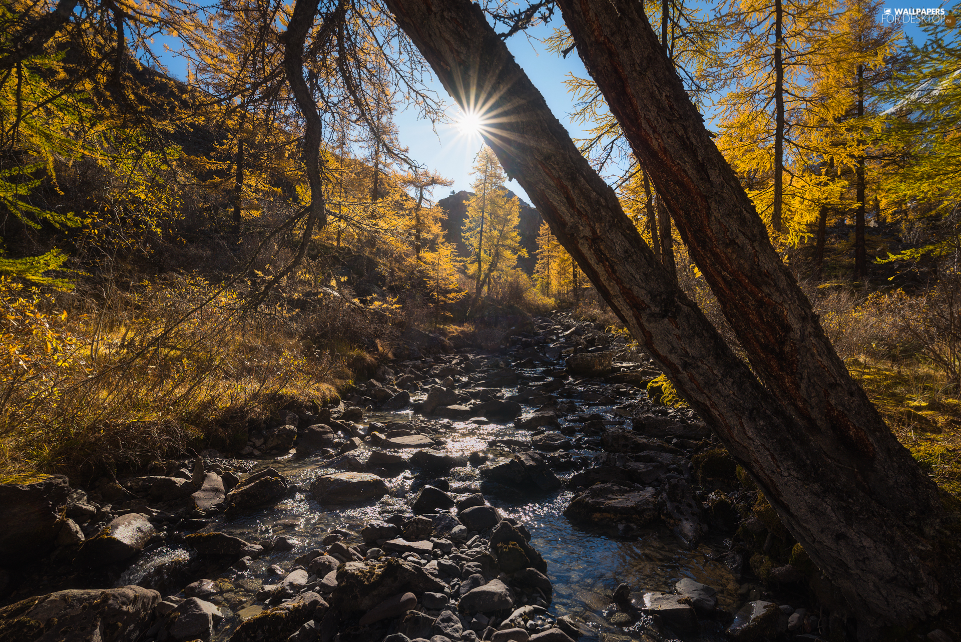 viewes, autumn, Stones, rays of the Sun, River, trees