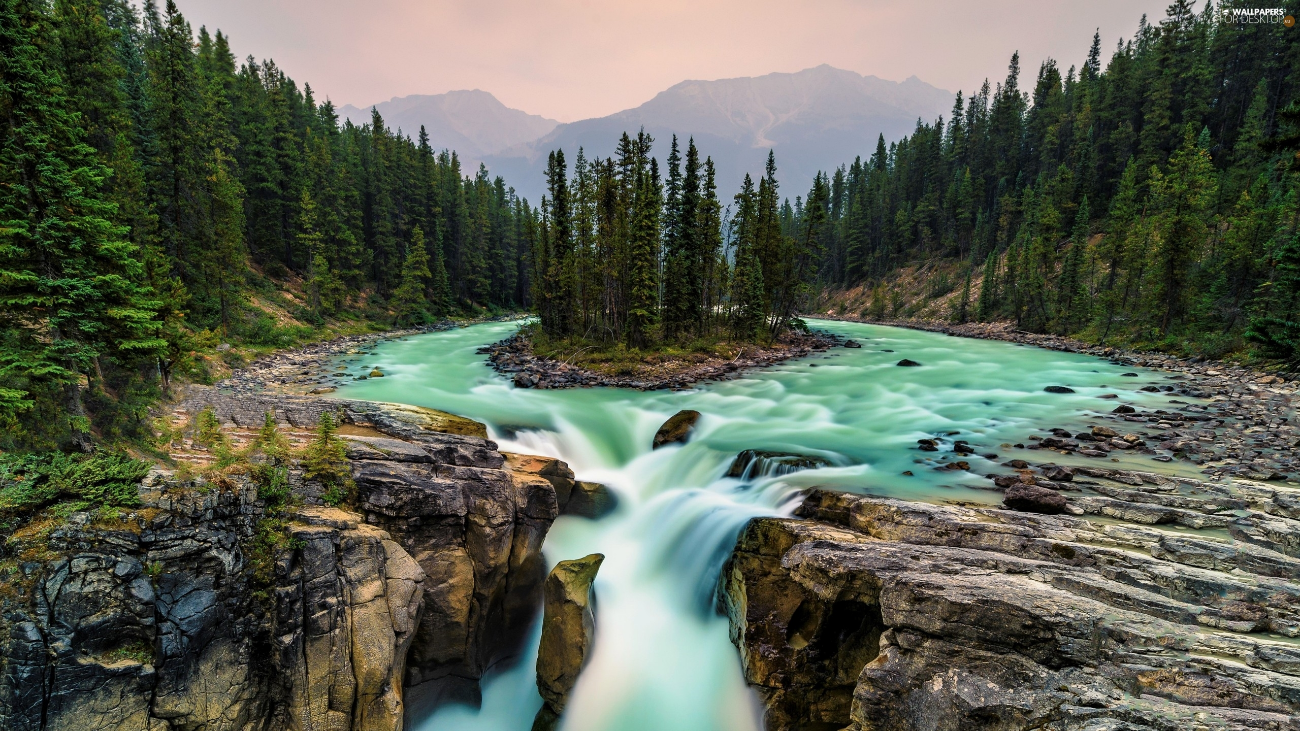 Sunwapta River, Sunwapta Waterfall, forest, trees, Alberta, Canada, Mountains, Jasper National Park, viewes