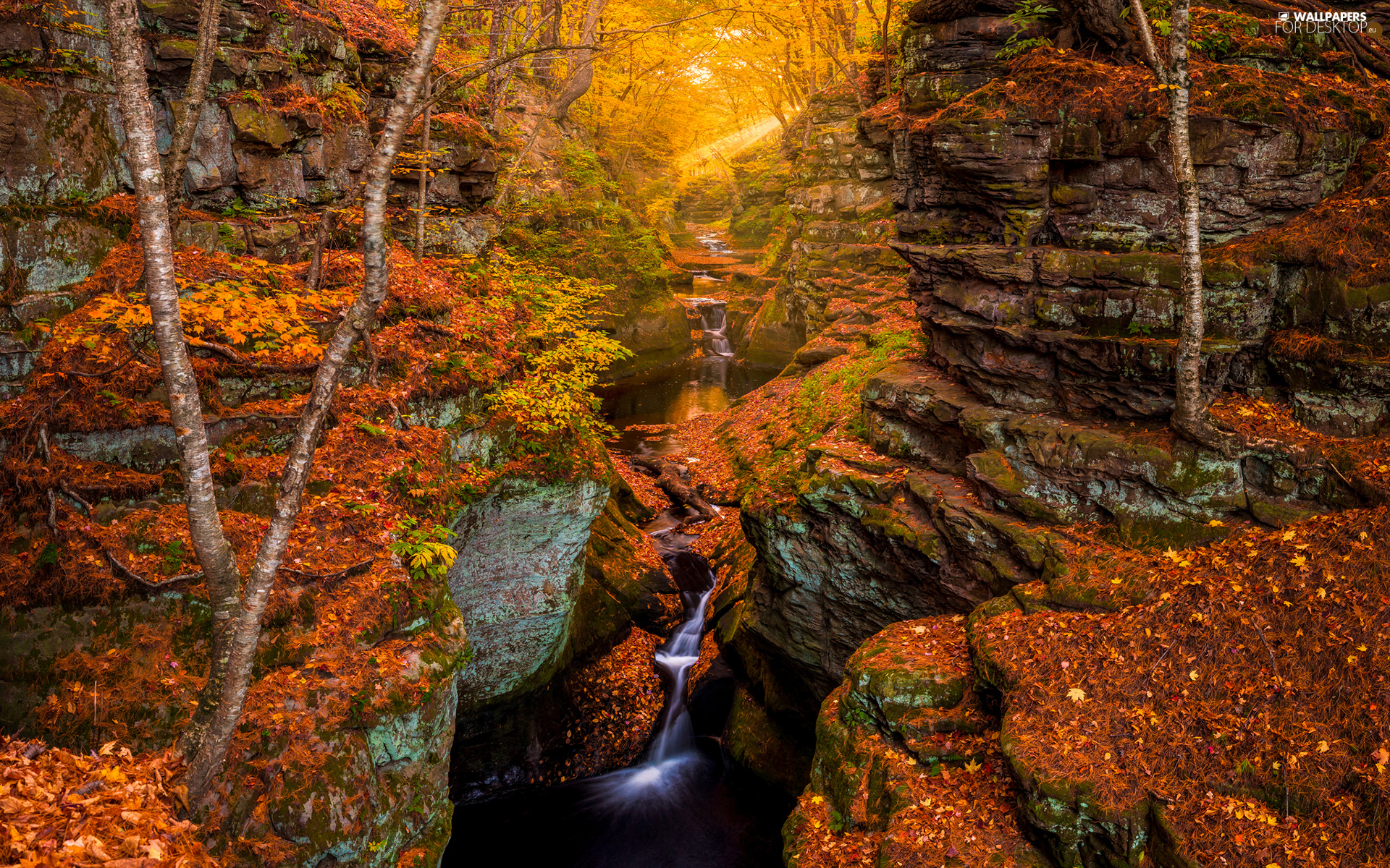 trees, autumn, River, waterfall, viewes, rocks