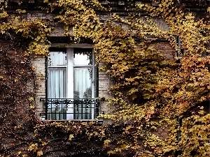Climbing, building, Bush, Window, front, Autumn, Leaf