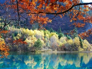 reflection, viewes, autumn, trees