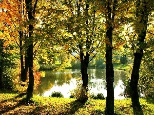 trees, Pond - car, autumn, viewes