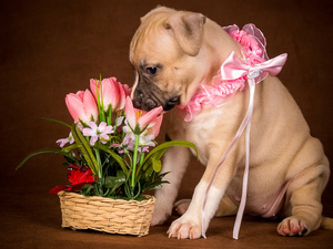 Flowers, basket, Puppy, Artificial, dog