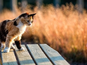 Mixed-breed dog, cat, Bench, color