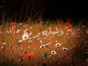 blades, grass, Flowers, daisies, Meadow