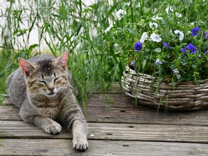 basket, dun, grass, boarding, pansies, cat