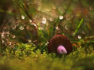 Mushrooms, Moss, Bokeh, toadstool