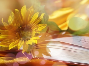 Sunflower, Book