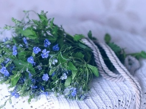 bouquet, Blue, flowers