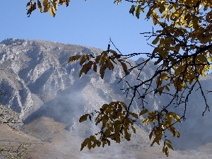 Leaf, Mountains, branch pics