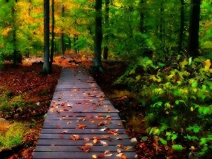 forest, autumn, bridges, Leaf