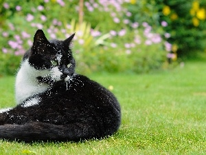 grass, black and white, cat
