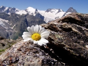 Mountains, Daisy